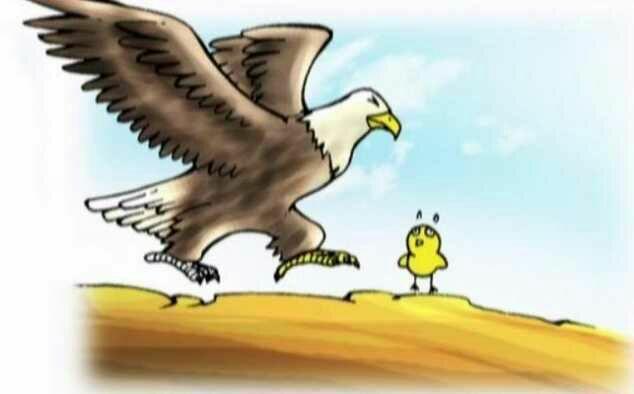 Con gà Đại bàng - Truyện ngụ ngôn hay về nuôi dưỡng ước mơ