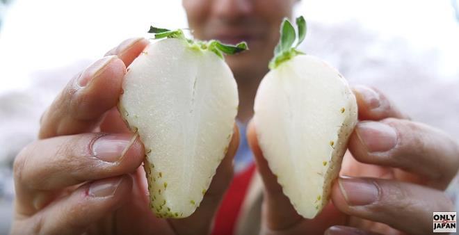 Dâu tây trắng như tuyết Đà Lạt gần 2 triệu/kg hút khách vì sao?