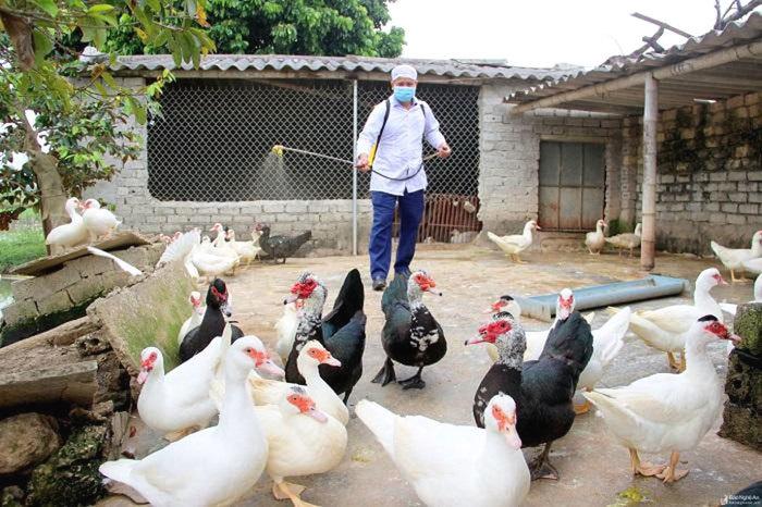 Hà Nội: Thời tiết nắng nóng, nguy cơ xảy ra dịch cúm gia cầm cao
