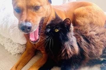 Cảm động hình ảnh mèo an ủi chú chó sợ sấm chớp gió bão