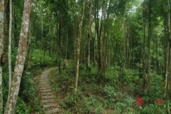 Vườn thực vật thiên nhiên Phong Nha - Kẻ Bàng: Điểm đến hấp dẫn du khách