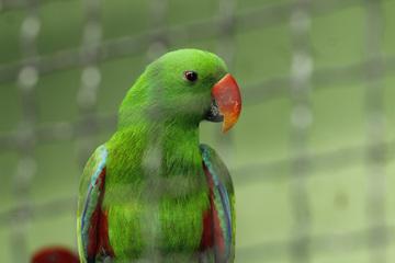 Vụ trộm 'có một không hai' bị phát hiện bởi một con vẹt