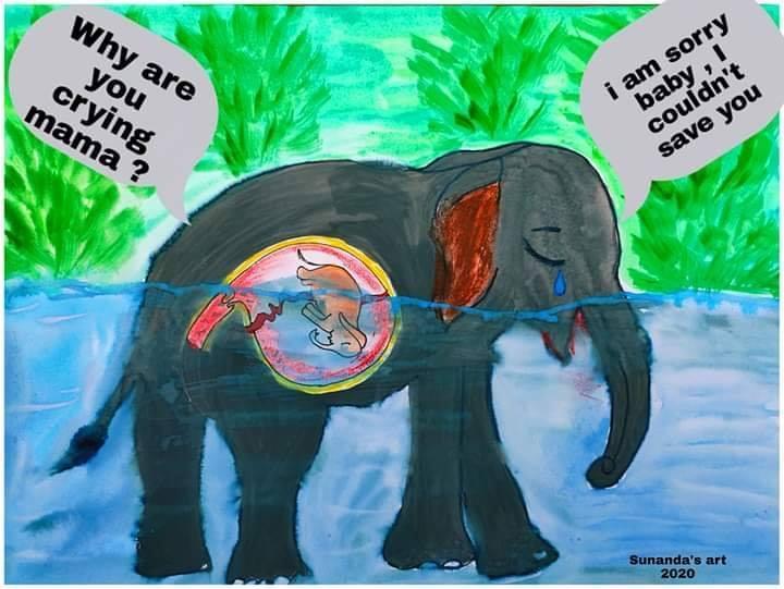 voi ăn phải mìn