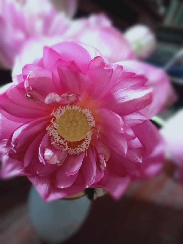 Cánh hoa sen trở thành nguyên liệu món chả 'độc lạ' của mẹ đảm đang