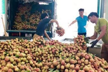 Mùa vải thiều Bắc Giang, kiếm bạc triệu mỗi ngày từ nghề 'cửu vạn'