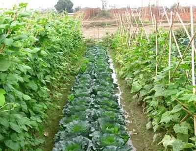 Gia Lâm (Hà Nội) chuyển dịch cơ cấu kinh tế gắn với xây dựng nông thôn mới