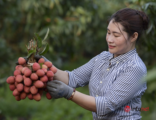 Yên Dũng (Bắc Giang) phấn đấu 100% các xã về đích trong năm 2020