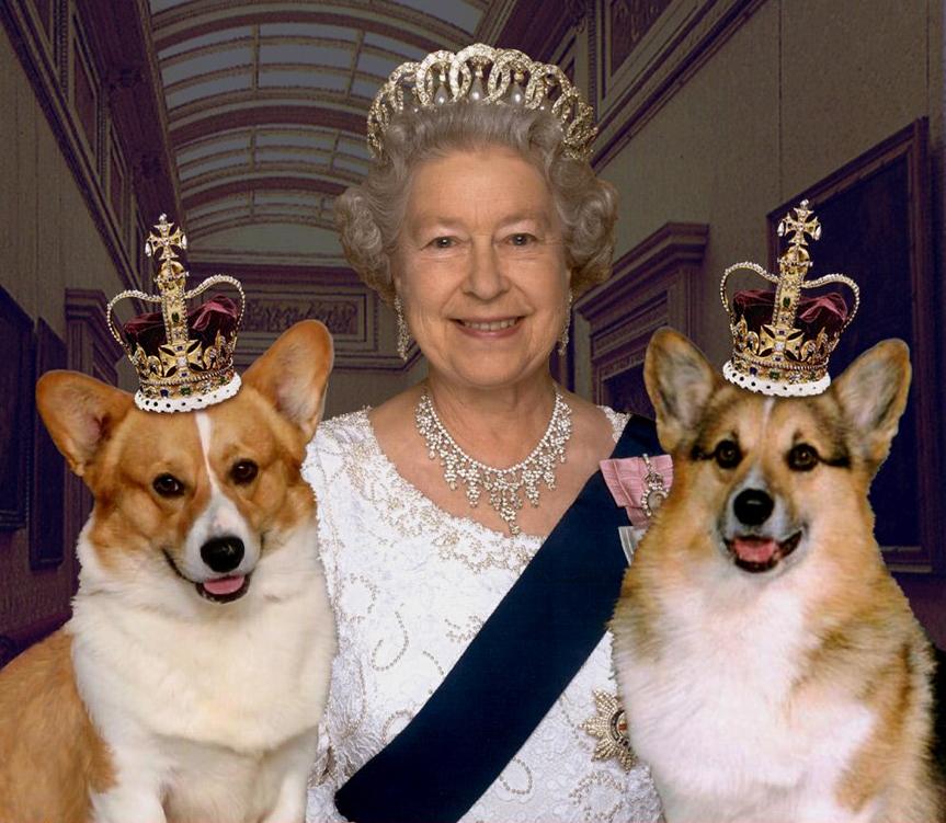 Đầu bếp tiết lộ thực đơn dành riêng cho 'đệ nhất khuyển' của nữ hoàng Anh