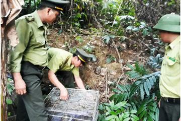 Tái thả động vật hoang dã nguy cấp, quý hiếm vào rừng đặc dụng Bà Nà - Núi Chúa