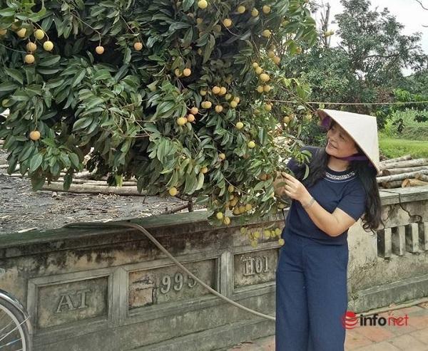 Du lịch Bắc Giang mùa trái ngọt