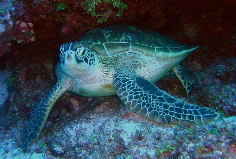 Khoảnh khắc kinh ngạc khi đàn rùa lớn nhất thế giới di cư