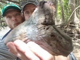 Phát hiện răng cá mập cổ đại to bằng bàn tay người ở Nam Carolina