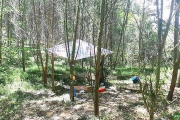 Khởi tố vụ án cháu bé 5 tuổi tử vong trong rừng ở Nghệ An
