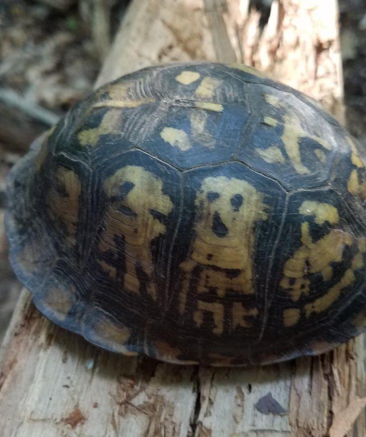 15 thú cưng sở hữu 'món quà' đặc biệt mẹ thiên nhiên ban tặng