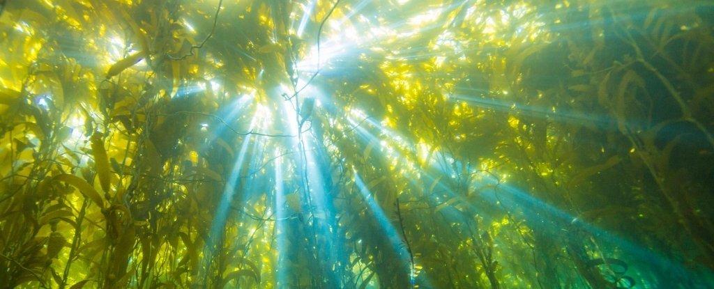 Sự thật về cách sản xuất năng lượng sử dụng được từ thực vật