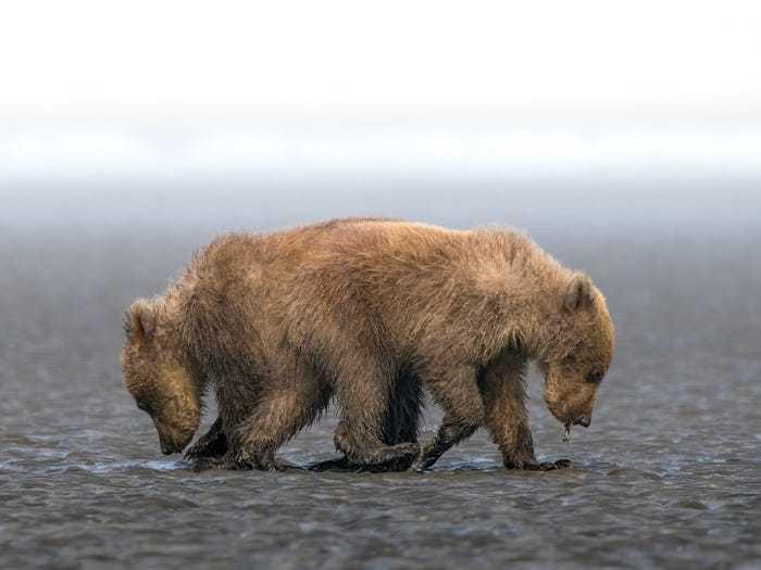 Loạt ảnh chiến thắng giải thưởng nhiếp ảnh khiến bạn đánh giá cao thế giới tự nhiên