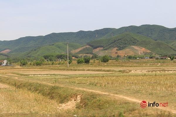 Khô hạn kéo dài, hàng nghìn ha lúa ở Nghệ An nguy cơ chết khô