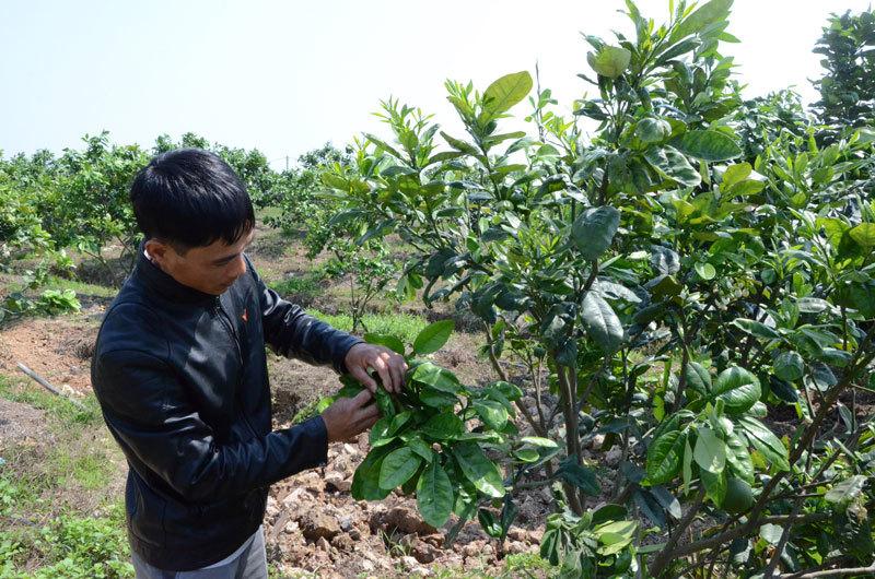 Hà Nội lấy ý kiến việc xét công nhận huyện Sóc Sơn đạt chuẩn nông thôn mới