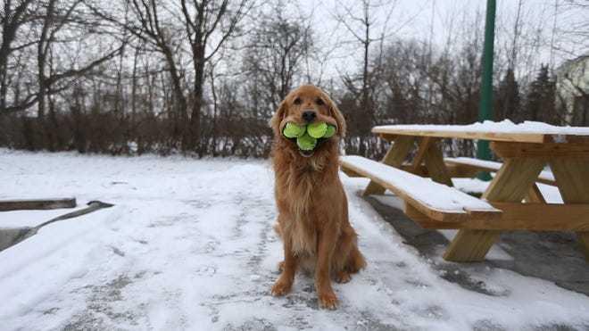 Chú chó miệng khủng lập kỷ lục Guinness thế giới