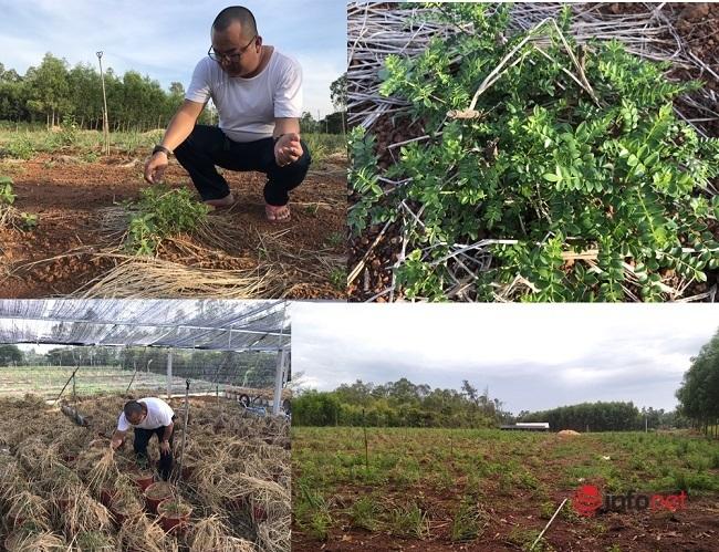 9x Quảng Ngãi trồng cây sọ chó