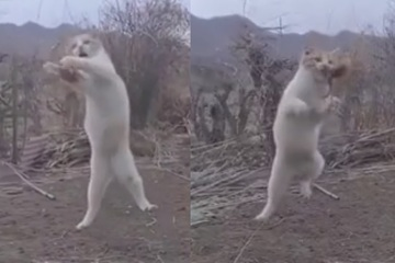 """Video: Chú mèo """"xuất chiêu"""" cực đỉnh, phi người tóm gọn chim đang bay"""