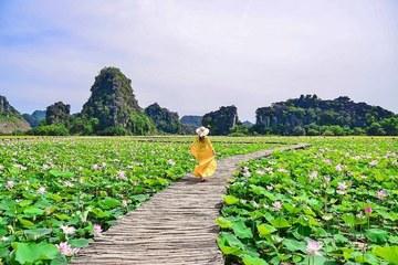 Đẹp lụi tim con đường gỗ giữa cánh đồng sen đang nở rộ ở Ninh Bình