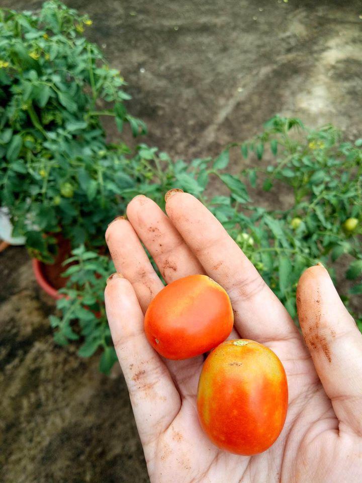 Khu vườn hoa trái của cô gái thành phố ao ước cuộc sống nông thôn