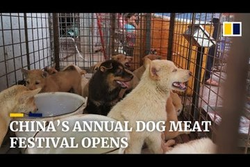 Bất chấp phản đối, lễ hội thịt chó vẫn được tổ chức ở Trung Quốc
