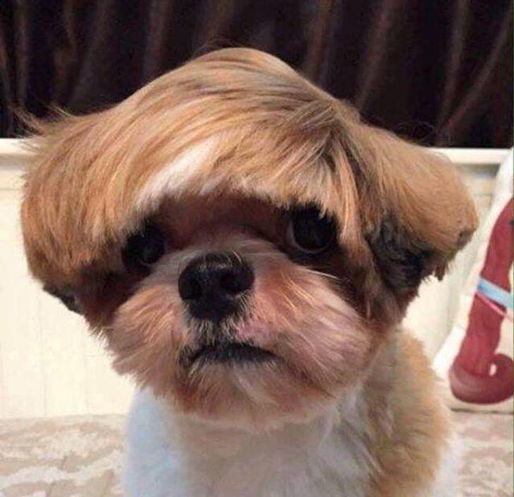 tóc cún cưng