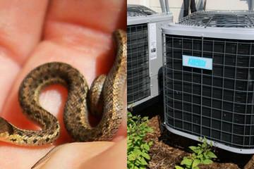 Kinh hãi phát hiện 40 con rắn con sống trong điều hòa ở Ấn Độ