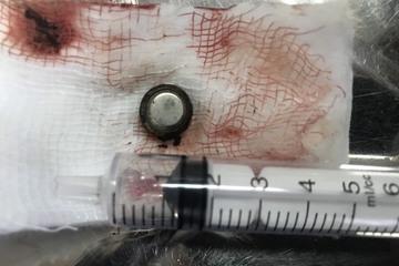 Pin cúc áo trong đồ chơi nguy hiểm thế nào đối với trẻ?