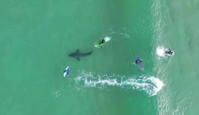 Kinh hoàng khoảnh khắc 'lướt sóng cùng cá mập trắng'