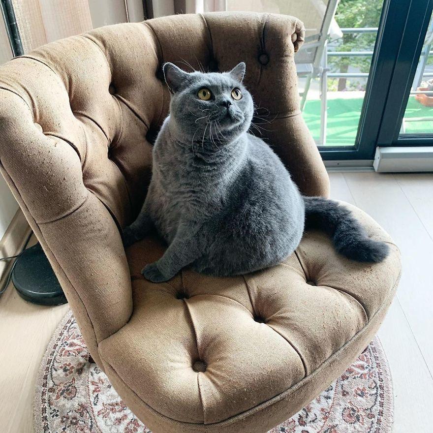 Cảm động câu chuyện mèo béo 'xiên vẹo' nổi tiếng khắp mạng xã hội