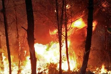 Cháy rừng ở Nghệ An: Nửa đêm lửa lại bùng lên dữ dội