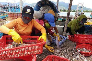 """Quảng Bình: Làng 'hồi sinh"""", rộn ràng mùa biển"""