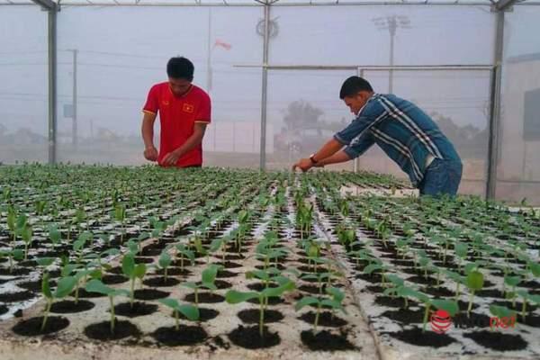8X ứng dụng, chuyển giao thành công kỹ thuật trồng dưa lưới, thu nhập 600 triệu đồng/năm