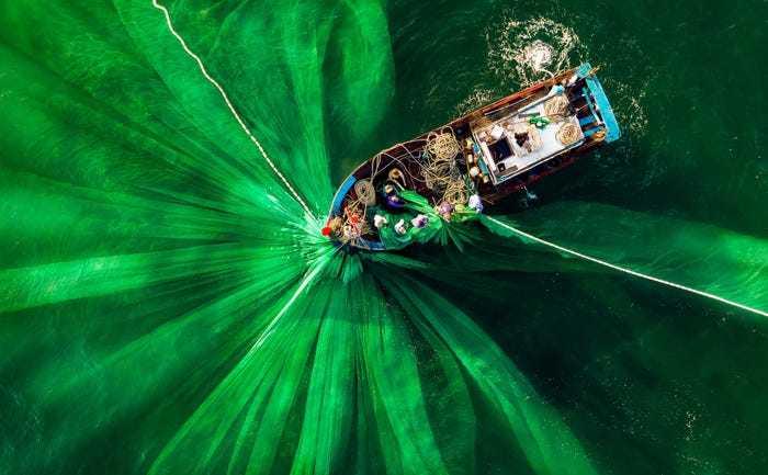 ảnh xanh green 2020