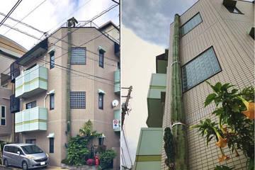 Choáng váng với cây xương rồng cao hơn tòa nhà 3 tầng ở Nhật Bản