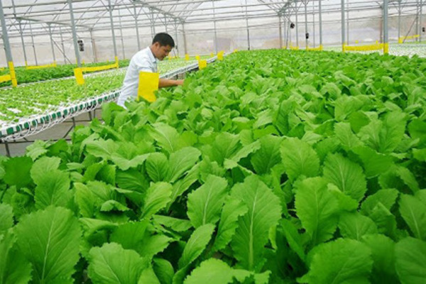Phê duyệt Đề án phát triển nông nghiệp hữu cơ giai đoạn 2020-2030