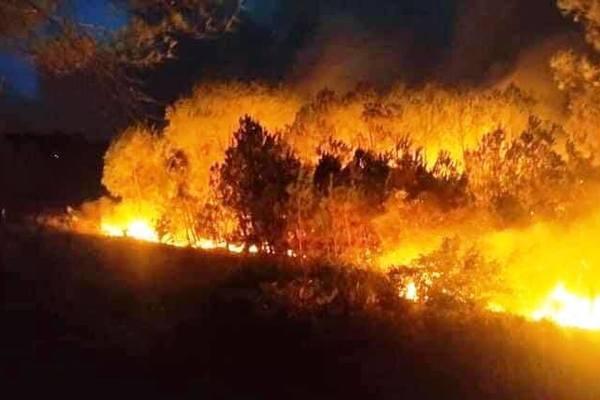 Rừng thông lại bốc cháy ngùn ngụt ở Nghệ An