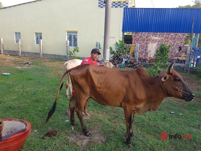 Vợ chồng trẻ người Khmer vượt khó từ nuôi bò, may vá