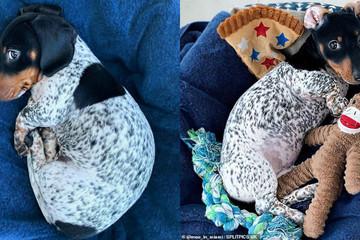 Chú chó 'ngoài hành tinh' nổi tiếng mạng xã hội với ngoại hình khác lạ
