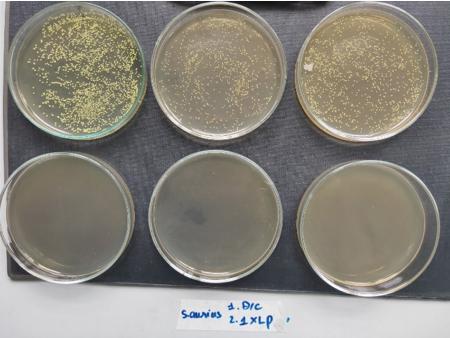 Sinh viên chế tạo thiết bị sát khuẩn tự động
