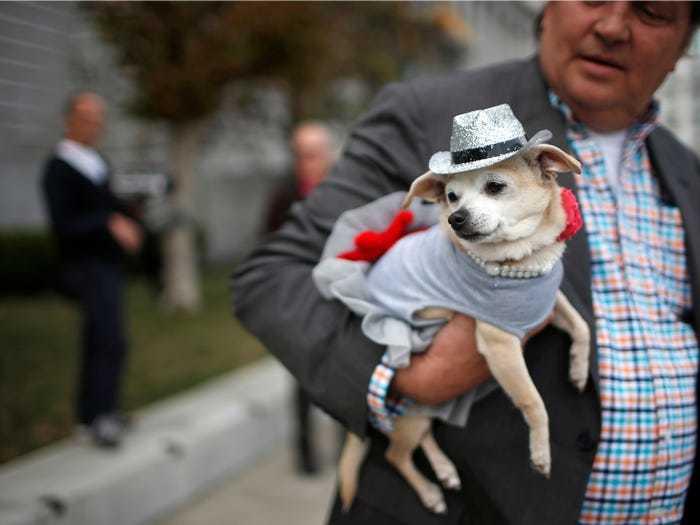 9 chú chó nổi tiếng được bầu làm 'thị trưởng' ở Mỹ