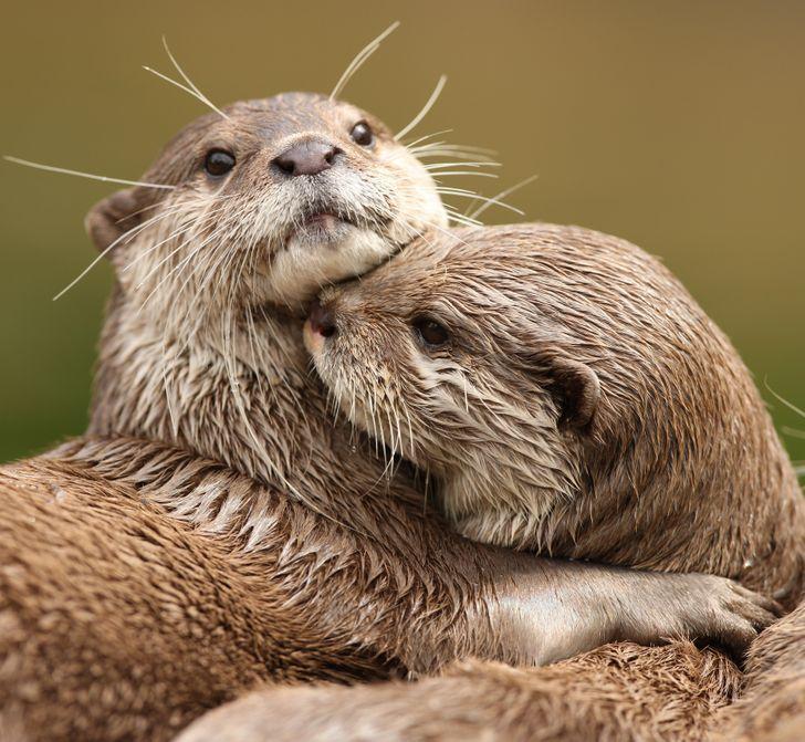 Những bậc thầy về độ chung thủy một vợ một chồng trong thế giới động vật