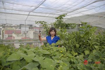 """""""Trang trại mini"""" xanh mát trên sân thượng của nữ kế toán Hà Nội"""