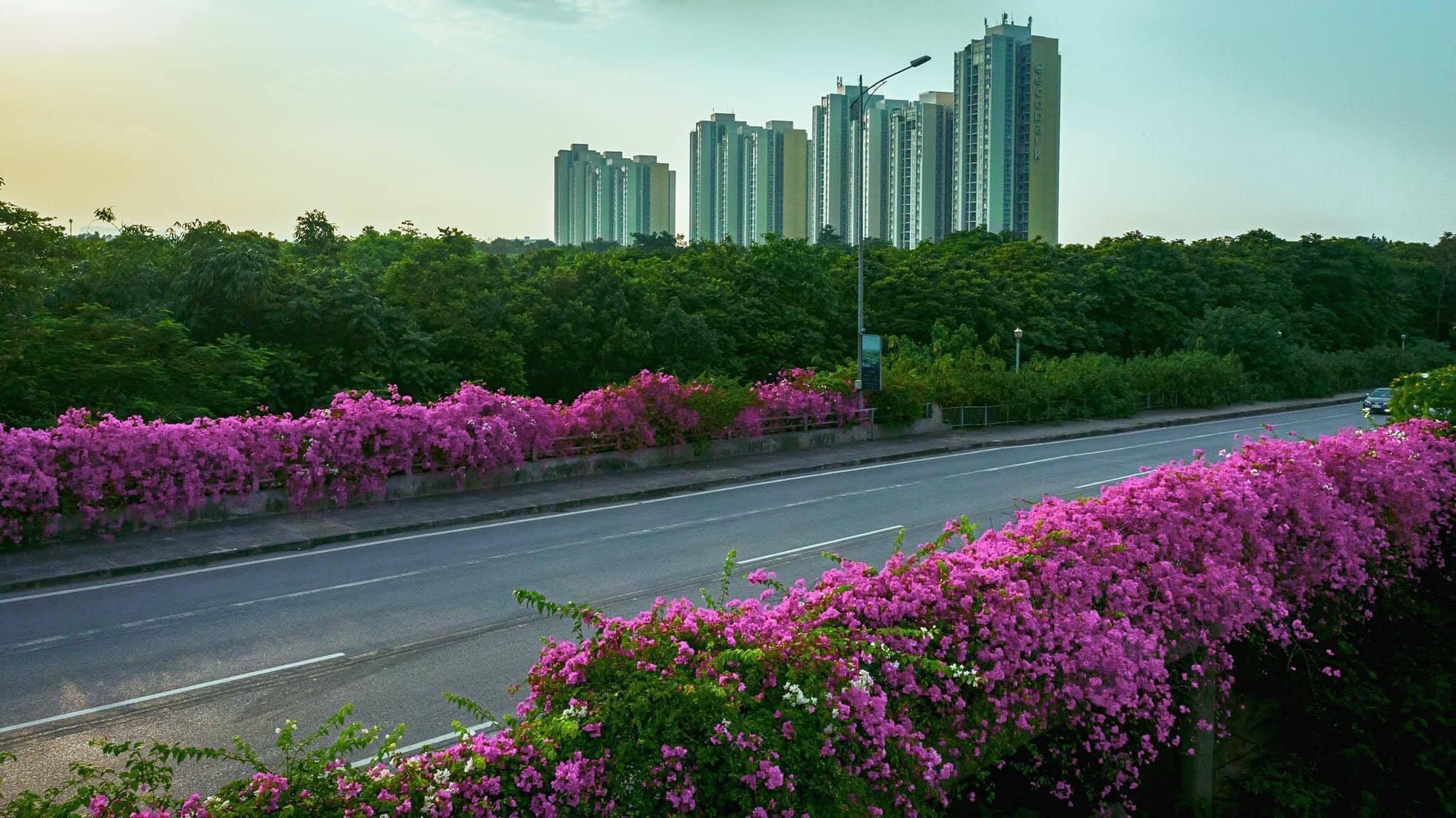 """Giới trẻ Hà Nội hào hứng """"check-in"""" con đường hoa giấy đẹp như mơ"""