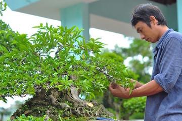 Hội chợ du lịch làng nghề truyền thống và sinh vật cảnh huyện Thanh Oai