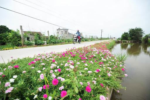 Huyện Vĩnh Tường đã hoàn thành 9/9 tiêu chí huyện nông thôn mới