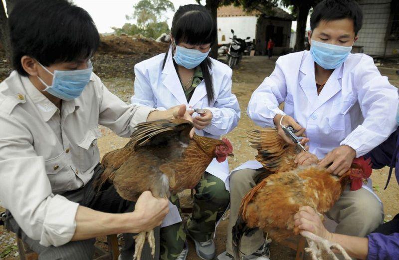 Quảng Trị: Tiêm phòng gia súc, gia cầm vẫn chưa đạt yêu cầu bảo hộ dịch bệnh